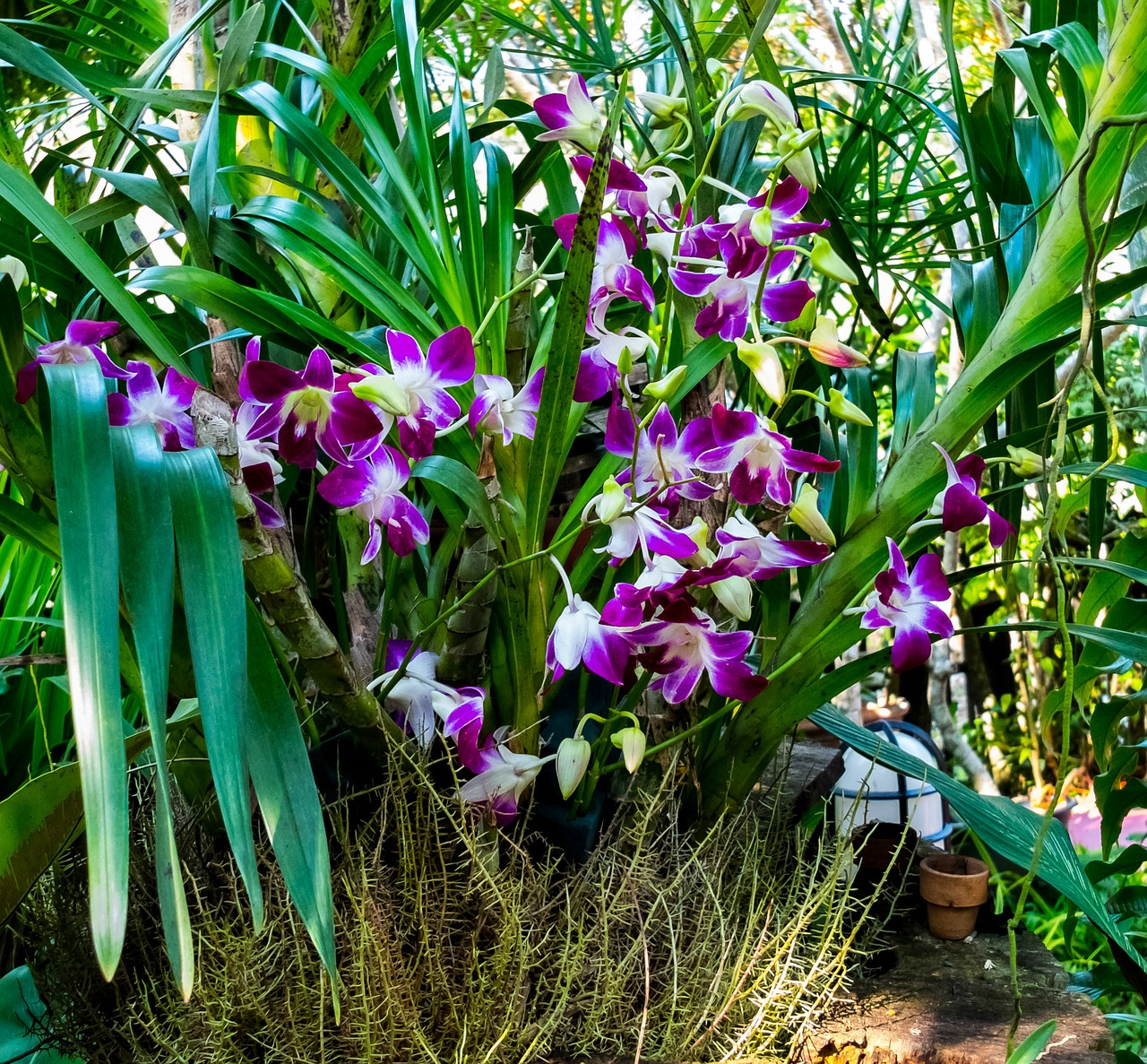 How To Fertilize Diffe Types Of Orchids Correctly