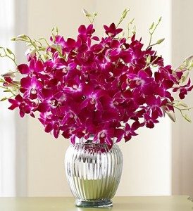 Exotic Breeze Orchids, 15-30 Stems - 15 Stems with Silver Ginger Vase