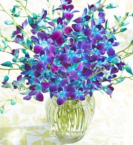 Ocean Breeze Orchids, 10-20 Stems - 20 Stems with Clear Vase