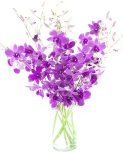 Purple Dendrobium Orchid