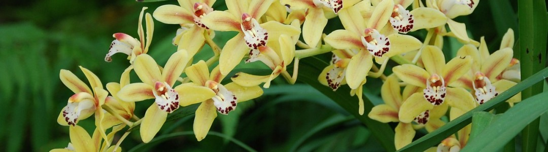 orchid image 1